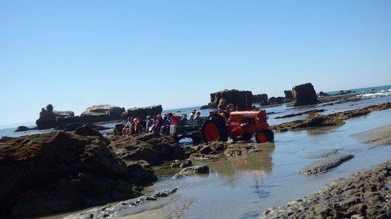 Gannet Beach Adventures : Hold on! It's going to get wet!