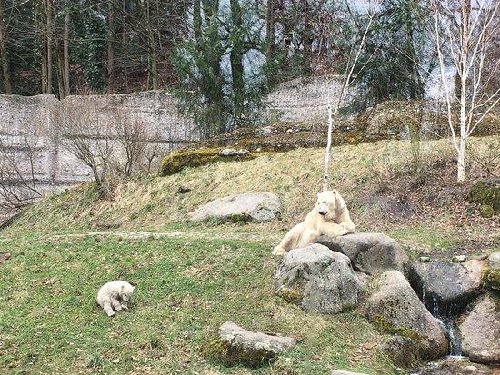Tierpark Hellabrunn: Eisbär