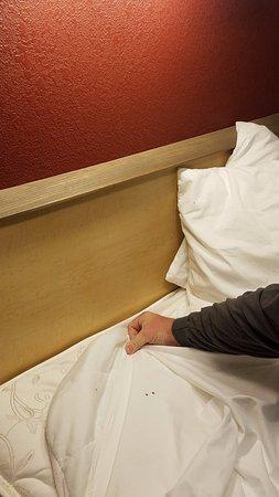 Джонсон-Сити, Теннесси: sheet with bed bug