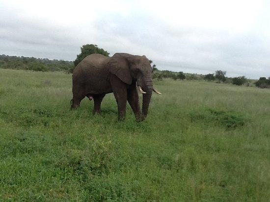 Mala Mala Private Game Reserve Photo