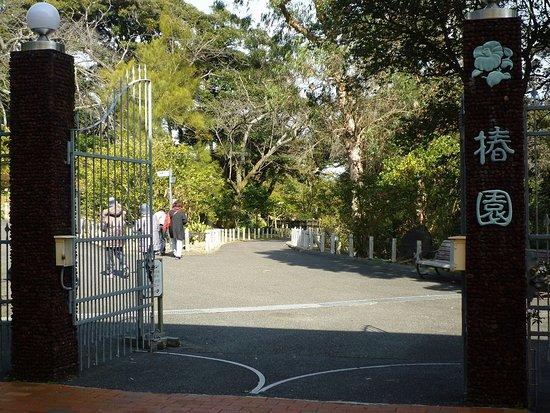 Oshima Park: 大島公園-椿園