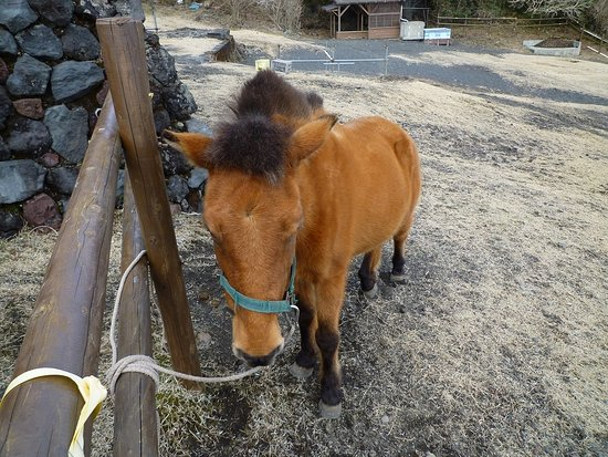 Mt. Mihara : 与那国馬がかわいい!