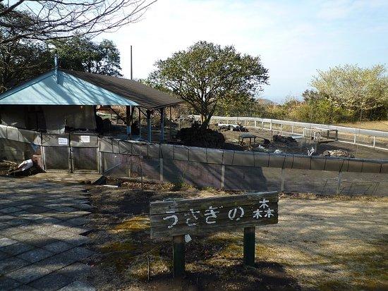 Tsubakihana Garden Squirrel Village : うさぎの森