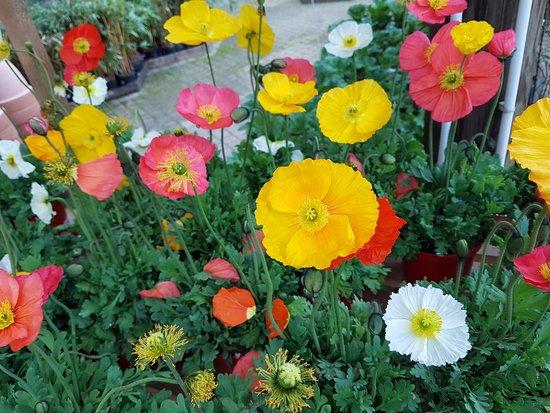 Generargues, France: fleurs à vendre