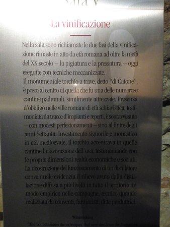 Torgiano, Itália: La Vininificazione
