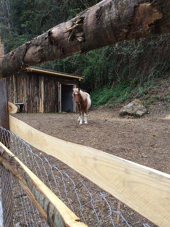 Cave, Italy: Pony Espress.....