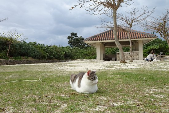 Kondoi Beach: コンドイビーチの島ネコさん。人を警戒することもなくうとうと寝ています。