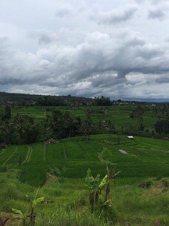 Jatiluwih Green Land: 我們是2017/03/20來到這個梯田的,當天運氣非常好,天氣不熱,但也沒下雨,距離烏布約1小時的車程,很適合帶小孩的家庭來這裡,3大梯田最美最壯闊的應該就是這個