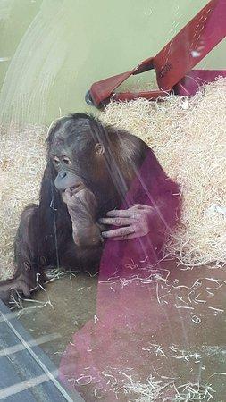 Monkey World : received_10211998545217064_large.jpg