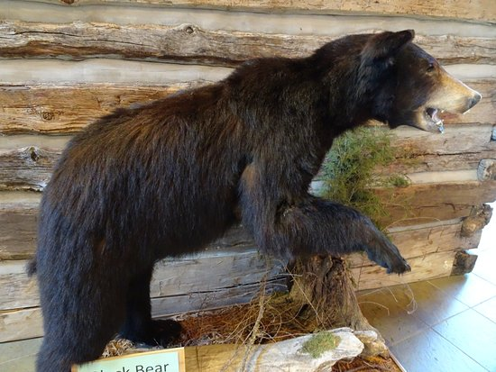 Mountainburg, Αρκάνσας: stuffed black bear