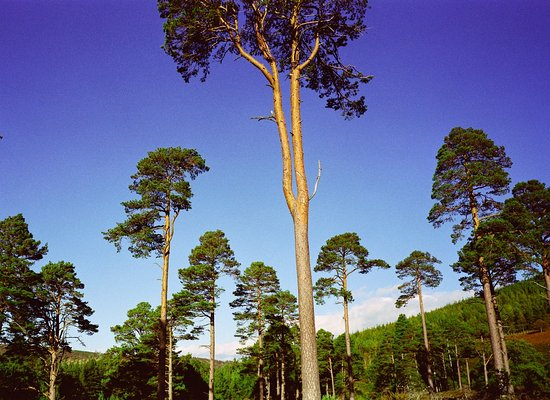 Glen Tanar National Nature Reserve