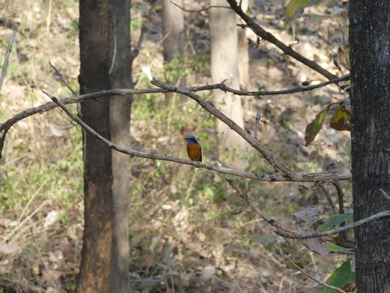 Yelandur, India: Some of the birds spotted in K Gudi during my trip