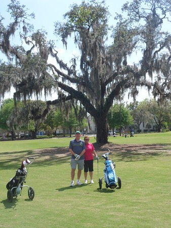 Winter Park, Spanish Moss Festooned Tree Hole #5
