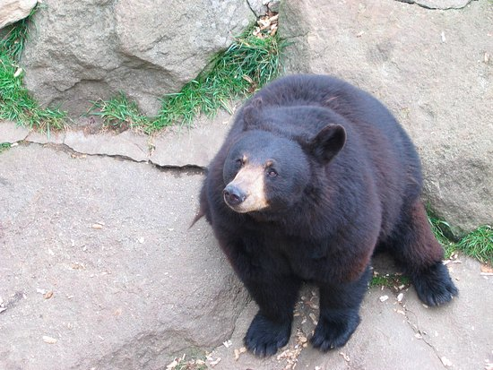 Burnsville, NC: Western North Carolina Black Bear
