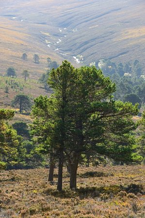 Aviemore and the Cairngorms Foto
