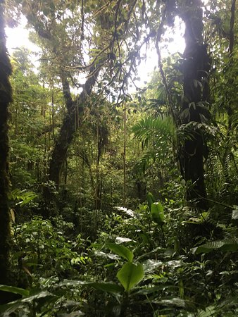 Monteverde Cloud Forest Reserve, Kosta Rika: photo8.jpg