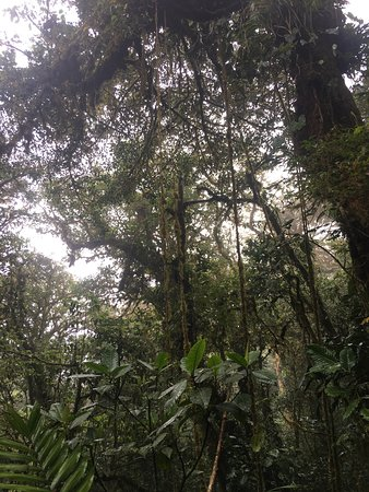 Monteverde Cloud Forest Reserve, Kosta Rika: photo9.jpg