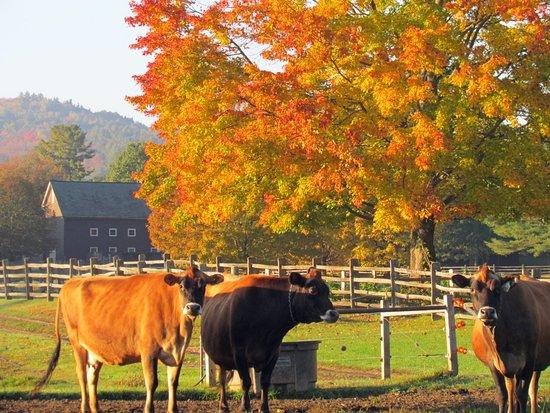 Woodstock, Вермонт: Fall foliage at theBillings Farm.