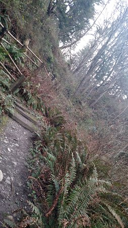 Camano Island, Вашингтон: Awesome climb up on this trail