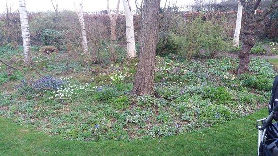 Oakham, UK: nice spring display