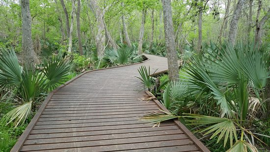 Palmetto State Park Gonzales 2020 All You Need To Know
