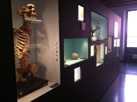 MUSME - Museum of the History of Medicine of Padova