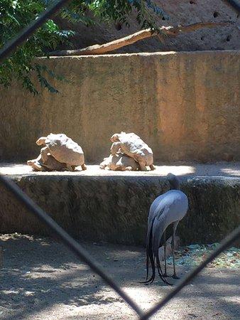 Hartbeespoort Dam - Snake and Animal Park