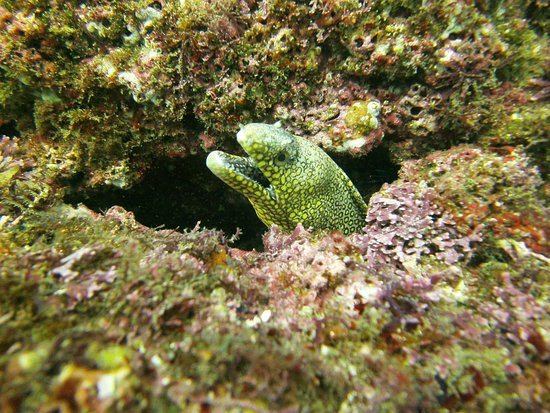 Huatulco Dive Center : I got more than 20 different eels in my photos. They were everywhere!