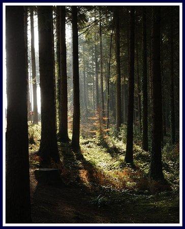Great Torrington, UK: Lower woodland walk in the morning