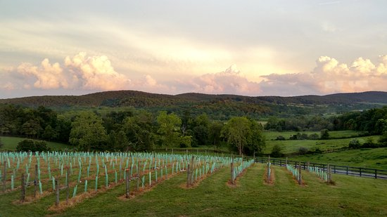 Middleburg, VA: A view from the 50 West Tack Room over the vineyard.