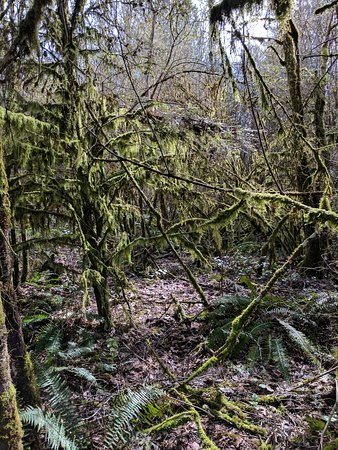 Tualatin Hills Nature Park: Lots of moss