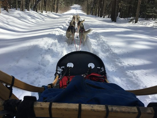 Braeburn Siberians: View from the sled; best view in the world!