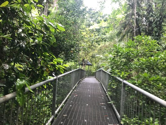 Cow Bay, Australia: Daintree Discovery Centre.