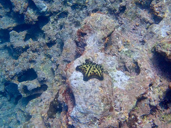 Puerto Villamil, Ecuador: Tortuga Island - Galapagos - Tour by Pahoehoe