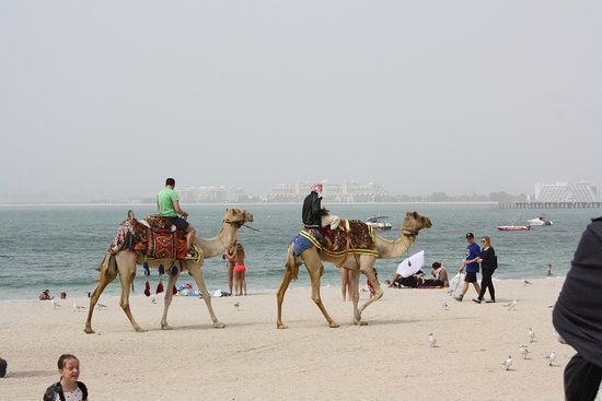 Movenpick Hotel Jumeirah Beach Camel Rides Available On The