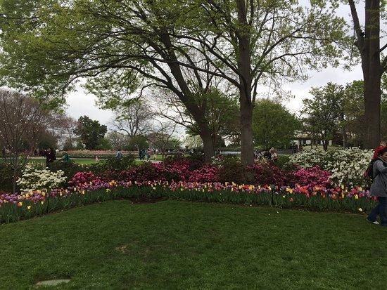 Tulips Picture Of Dallas Arboretum Botanical Gardens Dallas Tripadvisor