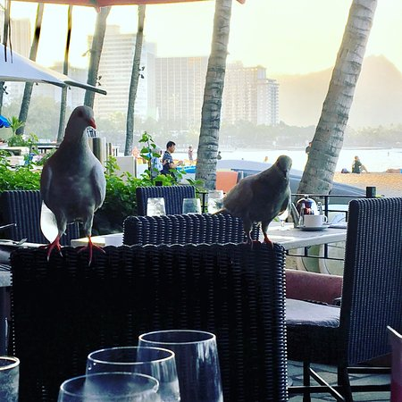 The Royal Hawaiian, a Luxury Collection Resort: Birds at breakfast with Diamond Head in the background.
