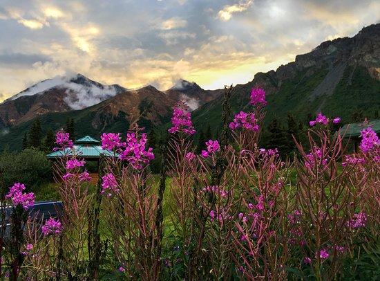 Glacier View, AK: Wild Fireweed
