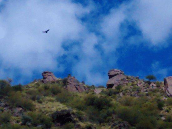 Nogoli, Argentina: Condor volando