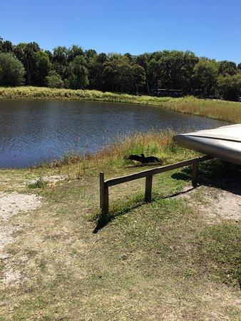 Myakka River State Park: photo3.jpg