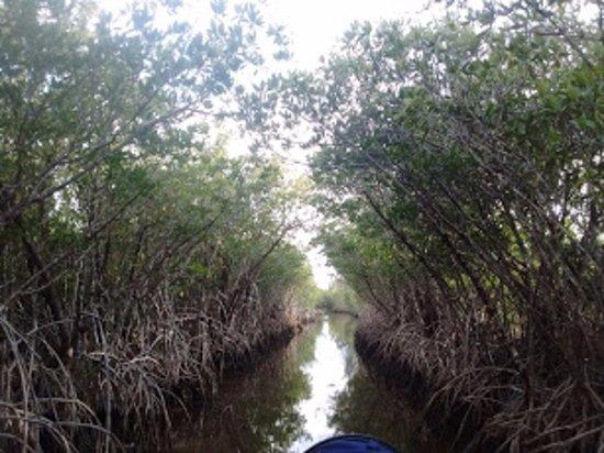 Jungle Erv's Everglades Airboat Tours: Full speed through this!!! Super fun.
