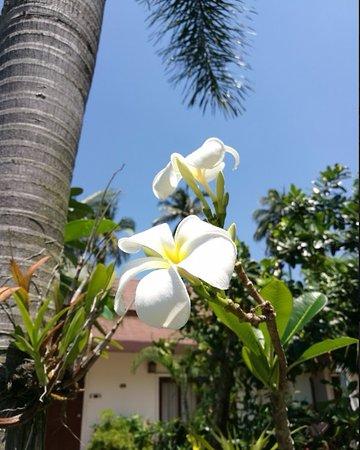 Lipa Noi, Thaïlande : jardin