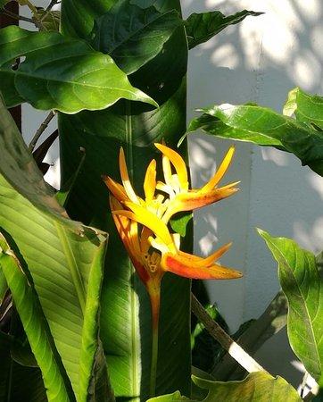 Lipa Noi, Ταϊλάνδη: jardin