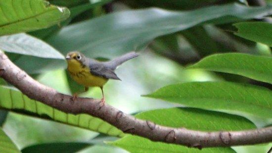 Ticuantepe, Nicaragua: Montibelli Private National Reserve