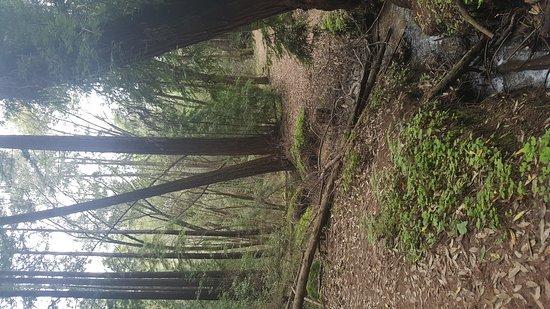 Felton, CA: Henry Cowell Redwoods State Park