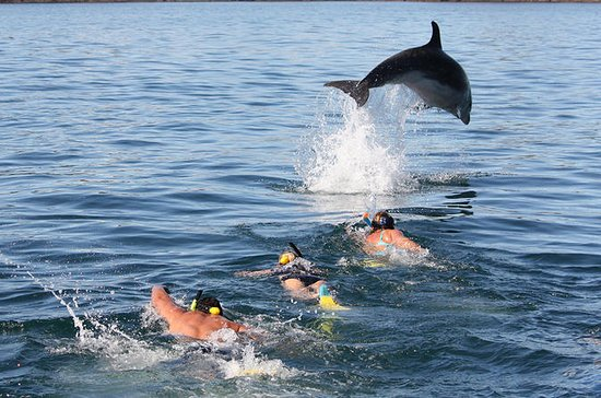 Dolphin Discovery in the Bay of