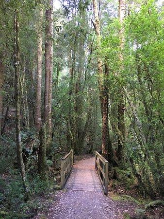 Strahan, Australia: Scenery on the West Coast Wilderness Railway trip