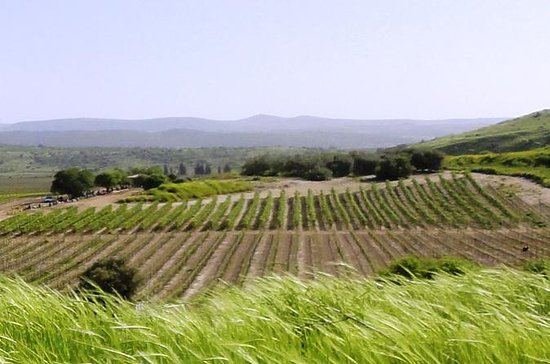 Central Israel Wine Tour From Tel Aviv