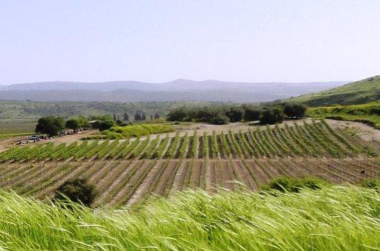 Weintour in Zentral-Israel ab Tel Aviv