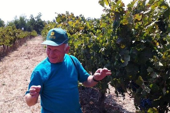 Northern Israel Wine Tour From Tel...